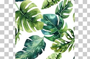 Paper Tropics Drawing Painting PNG
