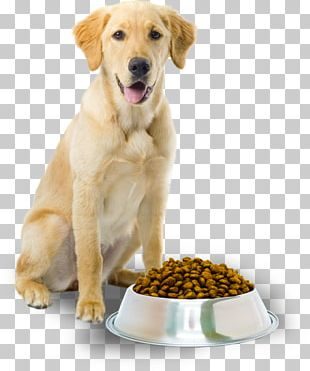 Dog Food Cat Pet Dog Grooming PNG