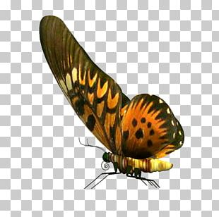 Butterfly PhotoScape Stock Photography PNG