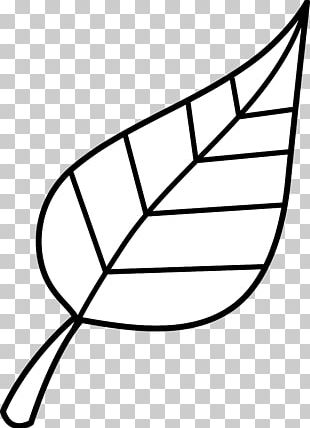Look At Leaves Black And White Leaf PNG