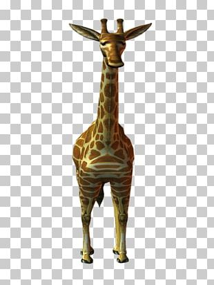 Northern Giraffe PhotoScape Animal Deer PNG