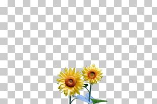 Common Daisy Common Sunflower Transvaal Daisy Floral Design Oxeye Daisy PNG