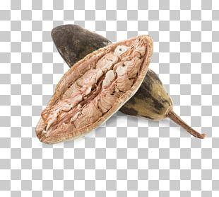 Antioxidant Superfood Fruit Essential Amino Acid PNG