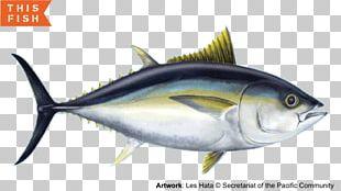 Mackerel Sardine Bigeye Tuna Yellowfin Tuna Skipjack Tuna PNG