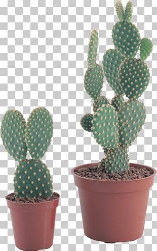 Cactus Flowers Portable Network Graphics PNG