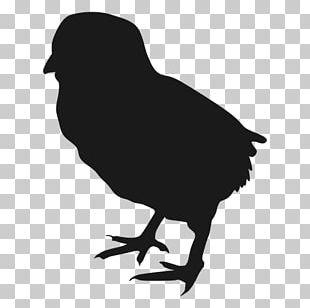 Chicken Meat Silhouette Bird PNG