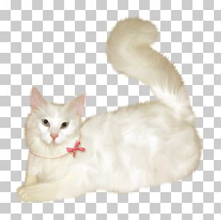 Burmilla Turkish Van European Shorthair American Wirehair Turkish Angora PNG