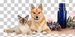 Dog Cat Puppy Pet Essential Oil PNG