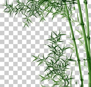 Bamboo Toothpaste PNG