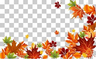 Autumn Leaf Color Autumn Leaf Color Euclidean PNG