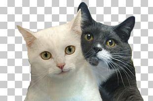 Cat Selfies Desktop Felidae PNG