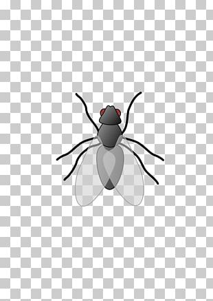 Free Content Insect PNG