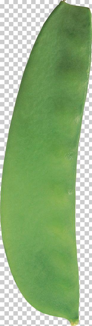 Pea Common Bean Silique Leaf PNG