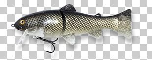 Spoon Lure Trophy Technology Information Perch PNG