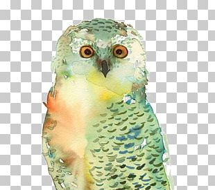 Owl T-shirt Bird Paper Watercolor Painting PNG