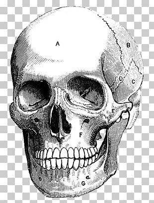 Skull Art Printmaking Drawing Illustration PNG