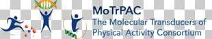 Logo Michigan State University YouTube Banner PNG