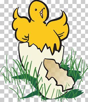 Chicken Hatching PNG
