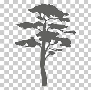 Tree Silhouette Arboriculture Woody Plant Branch PNG