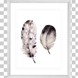 Frames Feather Black White Printing PNG
