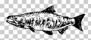 Chum Salmon Chinook Salmon Sockeye Salmon PNG