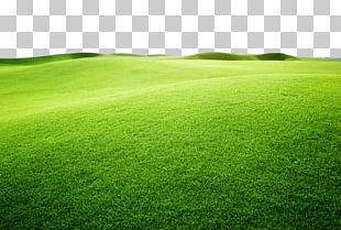 Artificial Turf Sports Venue Green Grassland Grasses PNG