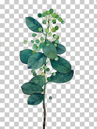 Leaf Watercolor Painting PNG