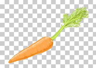 Carrot Cake Baby Carrot Vegetable PNG