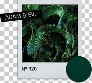 Leaf Alessandro Striplac Nail Polish Green Fototapeta PNG