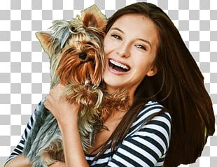 Yorkshire Terrier Dog Breed Puppy Pet Insurance Companion Dog PNG