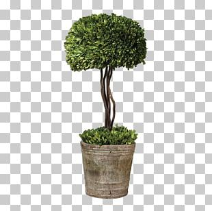 Box Tree Topiary Hedge Evergreen PNG