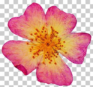 Pressed Flower Craft Petal Art Rose PNG
