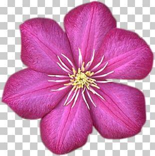 Flower Garden Roses Almaty Desktop PNG