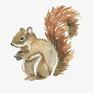 Cute Squirrel PNG