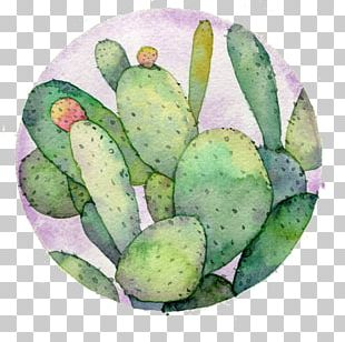 Watercolor: Flowers Watercolor Painting Drawing Cactaceae PNG