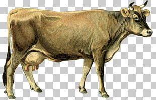 Dairy Cattle Calf Ox Goat PNG