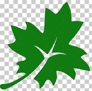 Acer Nigrum Maple Leaf Computer Icons PNG