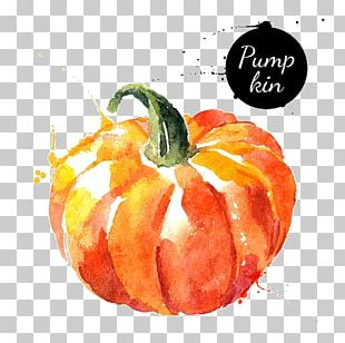 Watercolor Painting Vegetable Drawing PNG
