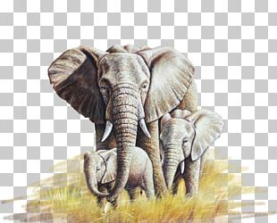 African Elephant Oil Painting Canvas PNG