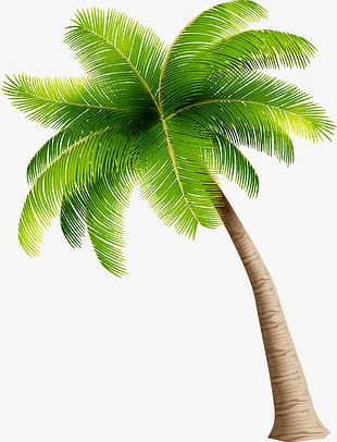 Simple Green Coconut Trees PNG