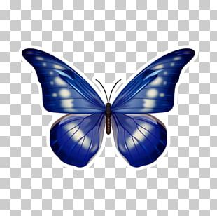 Butterfly Blue Morpho Menelaus Morpho Helena Pattern PNG