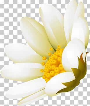 White Flower Advertising DenizBank PNG