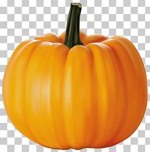 Cucurbita Pepo Pumpkin Cucurbita Maxima PNG