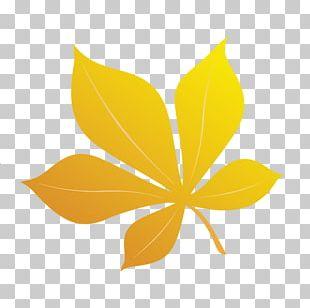 Poster Petal Leaf PNG