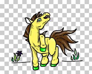 Horse Carnivora Cartoon Wildlife PNG