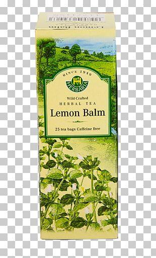 Flowering Tea Herb Hibiscus Tea Green Tea PNG