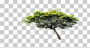 Tree Scalable Graphics PNG