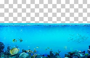 Underwater Sea PNG
