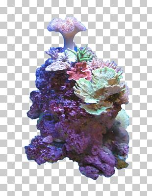 Coral Reef Color Deep-water Coral Sea PNG