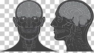 Head And Neck Anatomy Skull Human Head Brain PNG